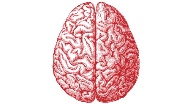 20161104-brain